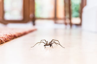 Texas Pest Control for Spiders