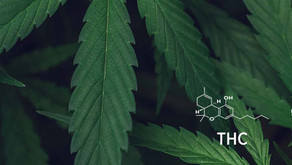 The Hype and Hope of Veterinary Cannabis