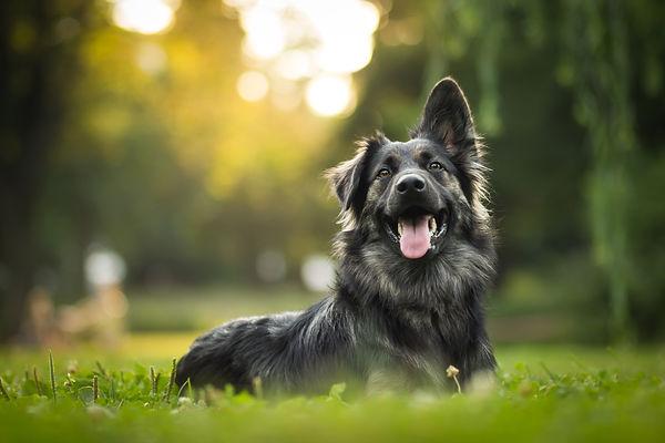 Dog laying in grass - WildLifeRx