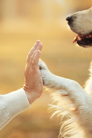 Agave dog rescue hand and paw