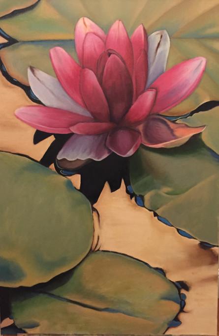 Dusk Lily