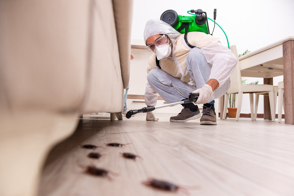 Texas Pest Control and Exterminator Services Near Me