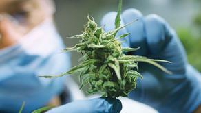 The Current State of Cannabis Research in Veterinary Medicine