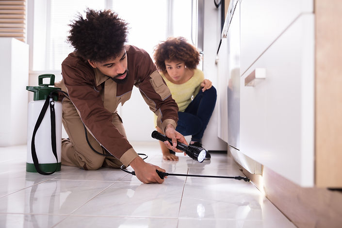 houston bed bug exterminating reviews