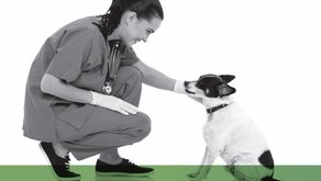 Veterinarian Discussion of Cannabis Within the Veterinarian-Client-Patient Relationship