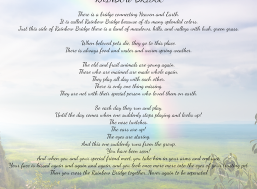 The Rainbow Bridge- a poem for those who have lost a pet