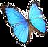 BioDezyne_butterfly_222x218_72dpi_edited