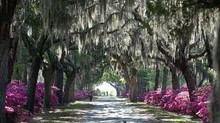 Spring Into Savannah