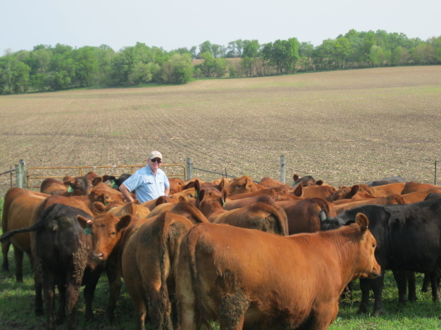 Joe with his cows
