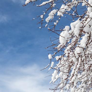 Snowpocalypse-22.JPG