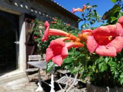 Fleur 4.jpg