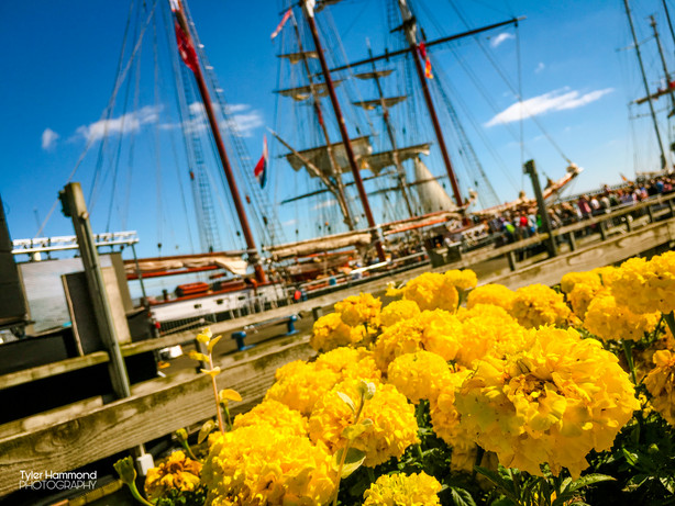 Tall Ships in Blyth