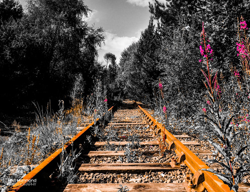 Ashington Community Woods - Train Track