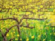 Bush-Color-Napa Valley Early Spring .jpg