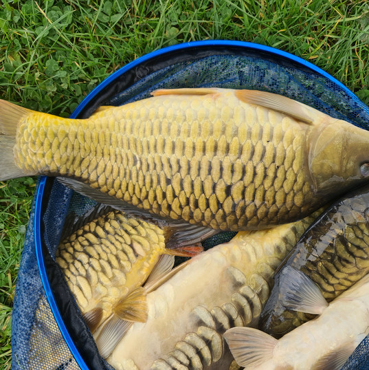 CARP AND TENCH FOR SALE 43.jpg