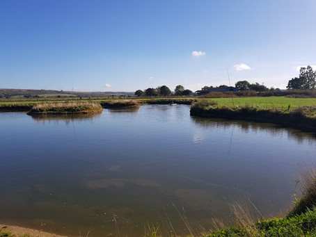 Fisheries In Lincolnshire - Lake Ecology (Part 2)