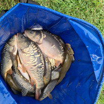 CARP AND TENCH FOR SALE 10.jpg