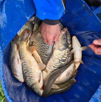 CARP AND TENCH FOR SALE 12.jpg