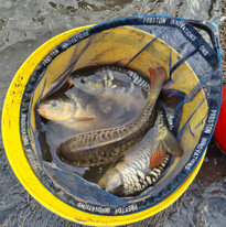 CARP AND TENCH FOR SALE 59.jpg