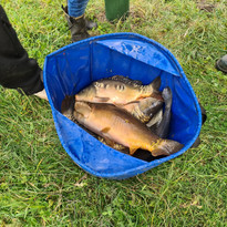 CARP AND TENCH FOR SALE 3.jpg