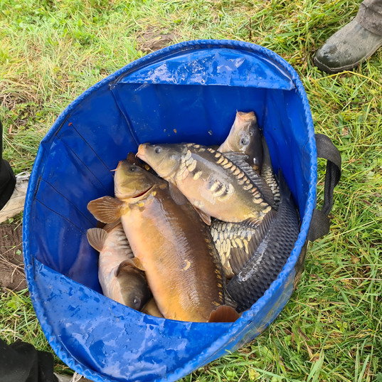CARP AND TENCH FOR SALE 2.jpg