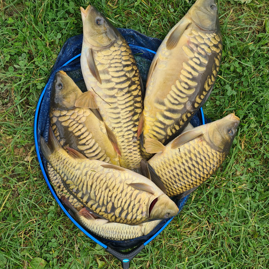 CARP AND TENCH FOR SALE 54.jpg