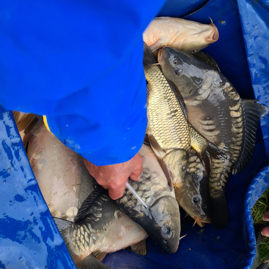 CARP AND TENCH FOR SALE 18.jpg