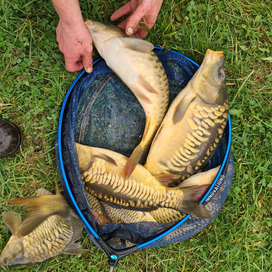 CARP AND TENCH FOR SALE 52.jpg