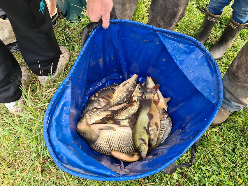 CARP AND TENCH FOR SALE 1.jpg