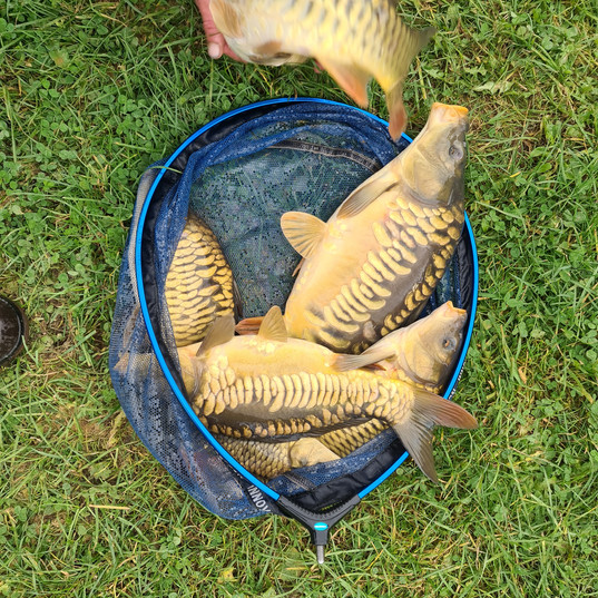CARP AND TENCH FOR SALE 51.jpg
