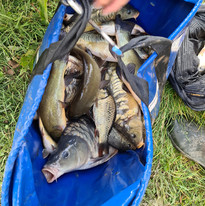 CARP AND TENCH FOR SALE 4.jpg