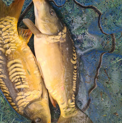 CARP AND TENCH FOR SALE 46.jpg