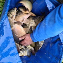 CARP AND TENCH FOR SALE 21.jpg