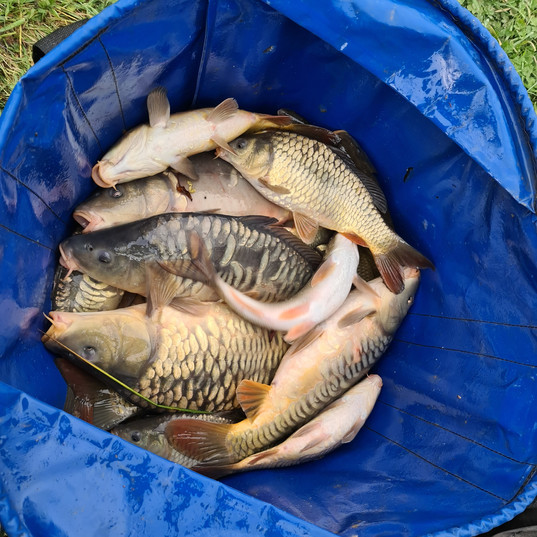 CARP AND TENCH FOR SALE 11.jpg