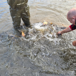 CARP AND TENCH FOR SALE 58.jpg