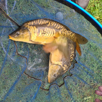 CARP AND TENCH FOR SALE 47.jpg
