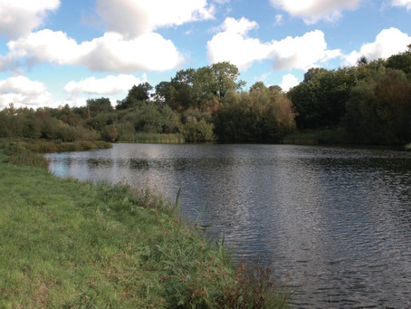 Ecology of Still-Water Fisheries In Lincolnshire Part Two