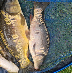 CARP AND TENCH FOR SALE 50.jpg