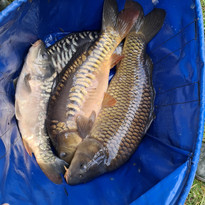 CARP AND TENCH FOR SALE 6.jpg