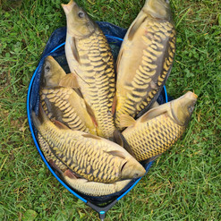 CARP AND TENCH FOR SALE 53.jpg