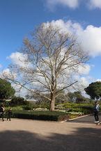 פארק רמת הנדיב