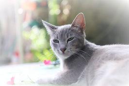 זה ראיי החתול המפונק שלנו