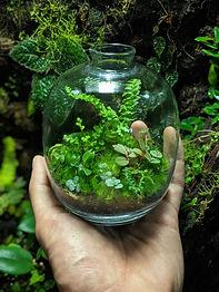 טבע בבית - סדנה להכנת אקווריום עם צמחים