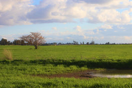 תמונת נוף שדות אחר הצהריים