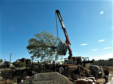 עצי נוי בוגרים הובלה עם מנוף.png