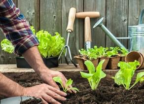הקמת גינת ירק