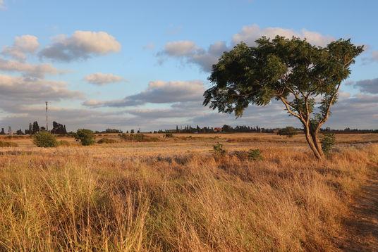 תמונת נוף שדות לפני השקיעה