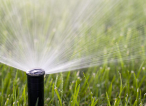 4 טיפים פשוטים לשמירה על גינה ירוקה ורעננה גם בימי הקיץ החמים
