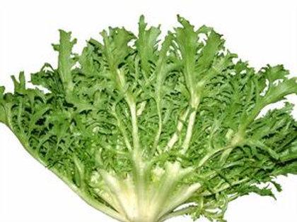 זרעי עולש – אנדיב