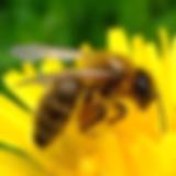 דבורים.webp